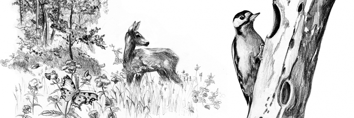 Illustraties FLORA en FAUNA 1